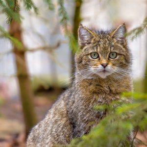 Биоразнообразие: ЕП иска задължителни цели за защита на дивата природа и хората