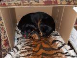 Доброволци от Благоевград помогнаха за спасяването на отровено бездомно кученце