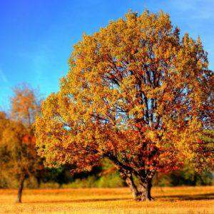 Късно лято в средата на октомври: Очакват се температури до 28 градуса