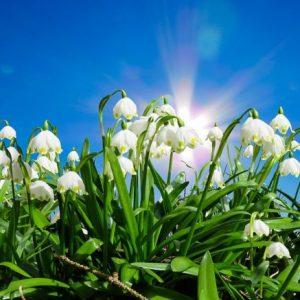 Новата седмица започва с пролетни температури