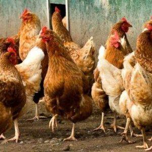 Първо огнище на птичи грип у нас за тази година