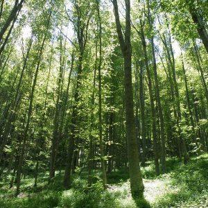 Сливат две горски стопанства в Петричко